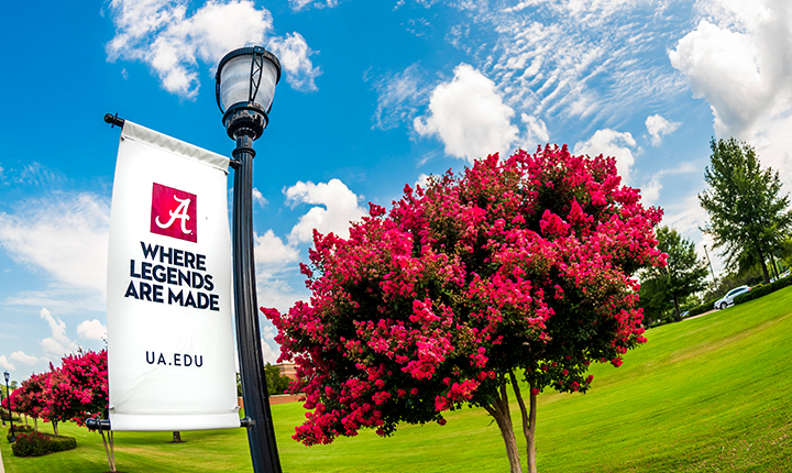 UA Where Legends are Made banner next to flowering tree